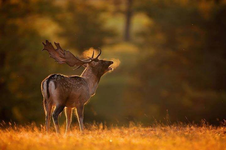 hunt jägarexamen rådjur äng morgon